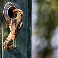 Wryneck The Provider by Torbjorn Swenelius