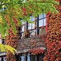 Wsu Somsen Windows In Fall by Kari Yearous