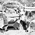 Wwi, Nell British Messenger Dog by Science Source