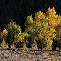 Wyoming Autumn Color One by Bob Phillips