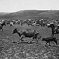 Wyoming: Cowboys, C1890 by Granger