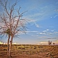 Wyoming High Desert Beauty by Amanda Smith
