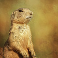 Wyoming Prairie Dog by Lin Myriadelle Youngblood