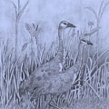 Wyoming Sandhill Cranes by Amber Nation