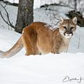 Wyoming Wild Cat by Elizabeth Waitinas