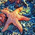 Yachats Oregon - Sea Star by Image Takers Photography LLC - Carol Haddon and Laura Morgan