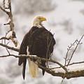 Yakama Canyon Eagle by Jeff Swan