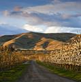 Yakima Valley Spring by Mike  Dawson