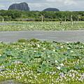 Yala National Park by Olaf Christian