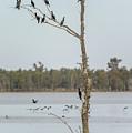 Yanga Lake 03 by Werner Padarin