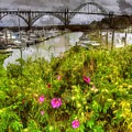 Yaquina Bay Roses by Thom Zehrfeld