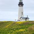 Yaquina Head Lighthouse by Harold Rau
