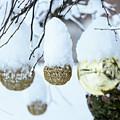 Yarn In The Snow by Nicola Simeoni