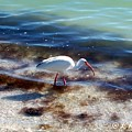 Yay Seaweed by Elizabeth Klecker