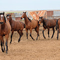Yearlings In Single File by Cheryl Poland