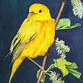 Yelllow Warbler by Sharon Farber