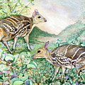 Yello-striped Mouse Deer by Sasitha Weerasinghe