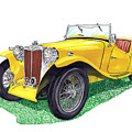 Yellow 1949 M G T C Midget by Jack Pumphrey