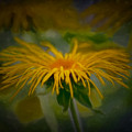 Yellow 2 by Leif Sohlman