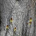 Yellow Aloe Flowers And Tree by Viktor Savchenko