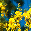 Yellow And Blue by John K Woodruff