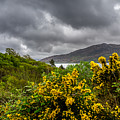 Yellow Flowers And Grey Clouds, Stormy Weather Over Sea In Scotland. by Ineke Mighorst