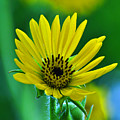 Yellow And Green 2 by Peter  McIntosh