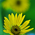Yellow And Green 3 by Peter  McIntosh
