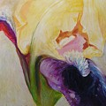 Yellow And Purple Iris  by Luciana Toma