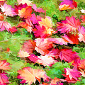 Yellow And Red Fall Maple Leaves by Jeelan Clark