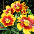 Yellow And Red Flowers by Gene Sizemore