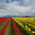 Yellow And Red by Mike Dawson