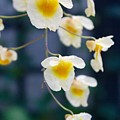 Yellow And White Cascading Flowers by Devon Kotke