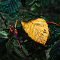 Yellow Autumn Leaf by Melisa Gumbs