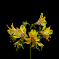 Yellow by Barbara BM