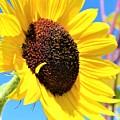 Yellow Beauty  by Claudette Letendre
