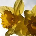 Yellow Beauty by Valia Bradshaw