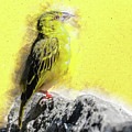 Yellow Bird by Art By Jeronimo