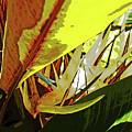 Yellow Bird by George D Gordon III