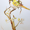 Yellow Bird by Mary Scott