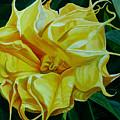 Yellow Blast by Julie Pflanzer