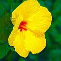 Yellow Blossom by Athala Carole Bruckner