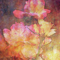 Yellow Blush Tipped Roses 1108 Idp_2 by Steven Ward