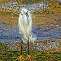 Yellow Boots by HH Photography of Florida