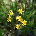 Yellow Bouquet On The Trail by LeeAnn McLaneGoetz McLaneGoetzStudioLLCcom