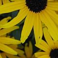 Yellow Bunch II by Robert Wilson