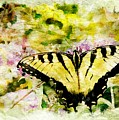 Yellow Butterfly by Ches Black