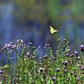 Yellow Butterfly Flyaway by Kerri Farley