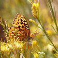 Yellow Butterfly by Marcia Socolik