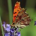Yellow Butterfly No.2 by Ana Dawani